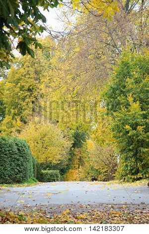 beautiful golden autumn time in a park