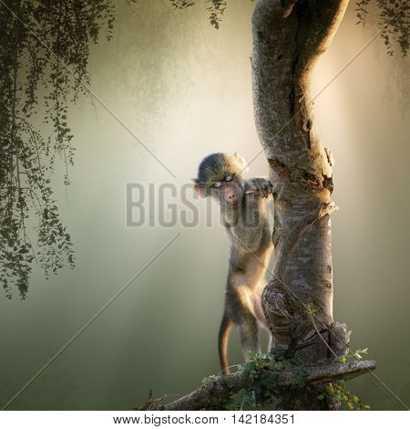 Baby Chacma Baboon playing in a tree with sunrays from the back (Digital Art)
