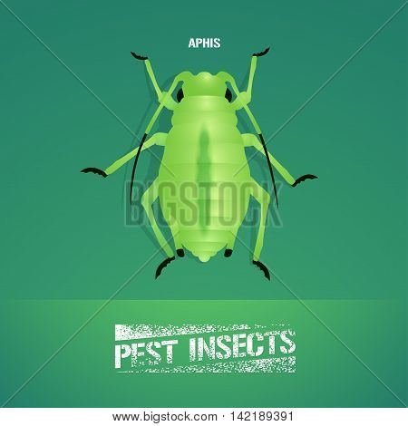 Realistic vector illustration of insect Aphidoidea aphis. Pest insect of agriculture farmland. Design element for insecticide poster brochure article