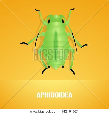 Realistic vector illustration of insect Aphidoidea aphis. Pest insect of farmland. Design element with Latin sign for insecticide poster brochure article