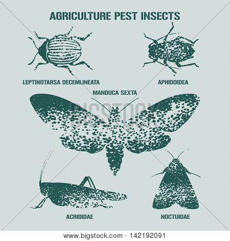 Set of pest insects vector illustration with signs. Agriculture and garden pest bugs fly colorado beetle locust moths as silhouettes and icons. Latin names for each insect