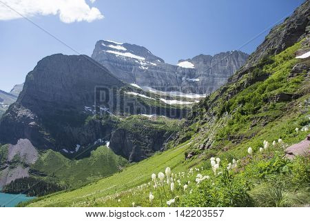 Beargrass - Grinnell Glacier Trail - Glacier National Park