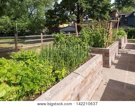 Raised garden beds in neighborhood garden with wooden planters