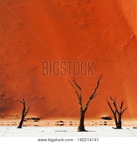 Dead Camelthorn Trees against red dunes in Deadvlei Sossusvlei. Namib-Naukluft National Park Namibia Africa