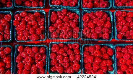 Bright red, fresh picked  raspberries in blue boxes