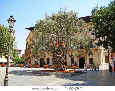 Palma de Majorca Spain - June 25 2008: Town hall of Palma with tree in front - Placa de Cort