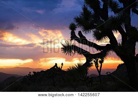 Sunset at Joshua Tree National Park, California.