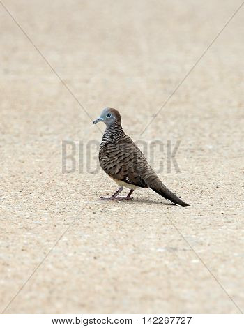 Image of a bird on brown street