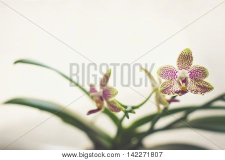 Small Beautiful Orchid Flowers