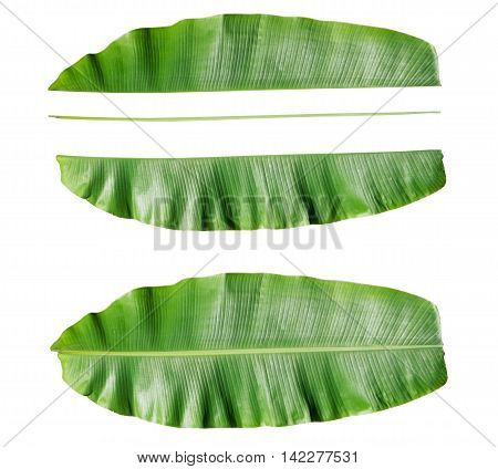 Fresh Banana leaf and component of banana leaf.