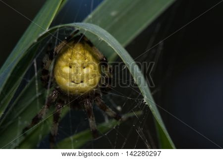 Spiders (lat. Araneae, Aranei, ancient Greek. ἀράχνη) -- group of arthropods, the second number of known members of the class Arachnida: about 42 thousand modern and about 1.1 thousand fossil species. Detachment is widespread. poster