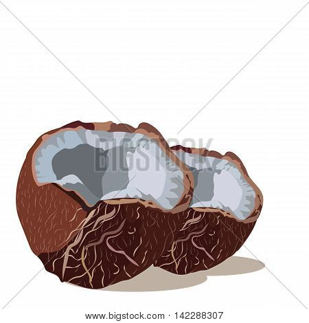 Fresh Coconut Vector isolated. Hand drawn watercolor on white background. Vector illustration of fruit coconut