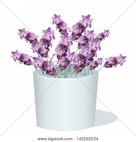 Lavender flowers in a white pot. Aromatic gift decor in watercolor paint style Vector. Gentle blossom floral bouquet. Vintage Label with lavender beautiful fragrance