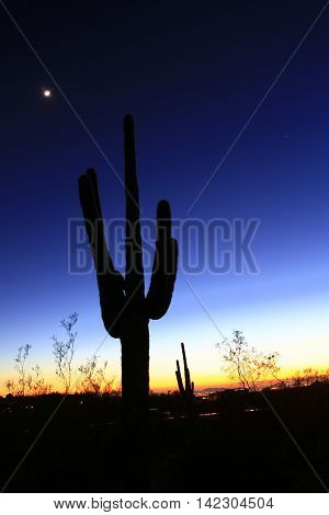 silhouette of Saguaro cactus in Arizona sunset