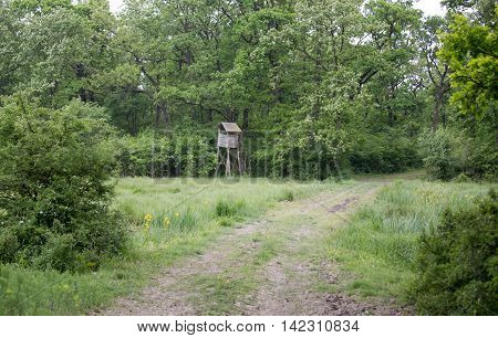 Wooden structure for watch tower in forest in summer. Wildlife and protected nature concept