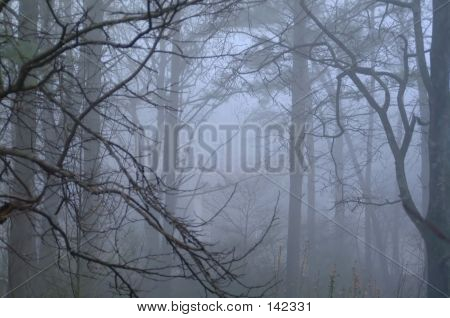 Forest In The Fog 1