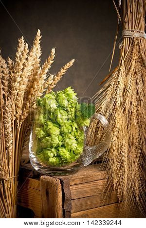 Hop cones in the glass with barley and wheat