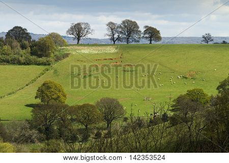 English landscape of fileds and trees on a hill. There are sheep in the field and it was taken in early spring before the trees are covered in leaves. Taken in Surrey England.