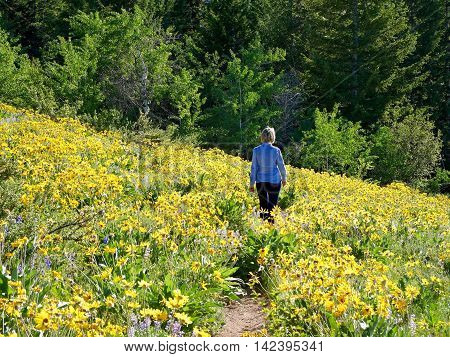 Woman walking through meadows with yellow flowers. Patterson Mountain in North Cascades National Park near Winthrop Washington.