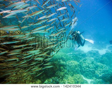 Diver with a school of fish in tropical sea.