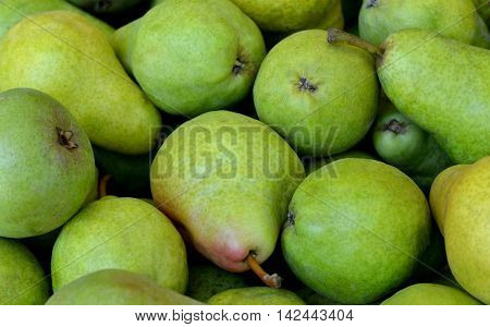 Green Bartlett Pears: Grouping in a bin at the farmers market.