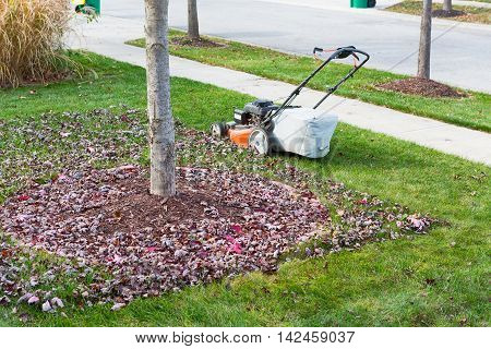 Neatening Up The Lawn In Autumn Or Fall
