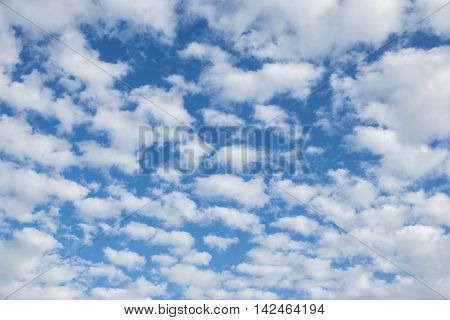many small fluffy clouds on the blue sky on a sunny summer day altocumulus or cirrocumulus formation background texture