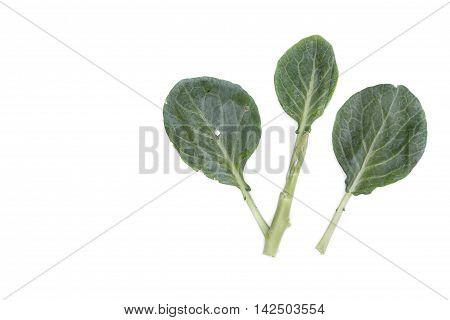 Chinese kale fresh vegetable  on white background.