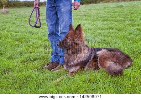 German shepherd Dog laid on grass next to his handler who is holding a lead