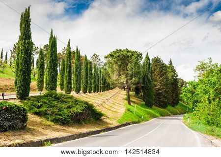 Road In Countryside In Tuscany, Italy