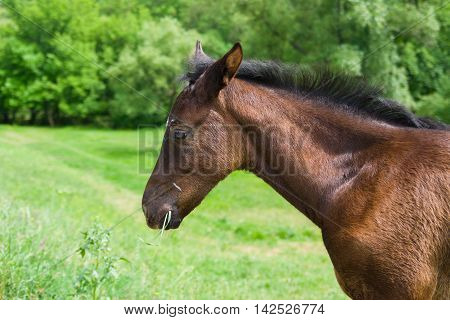 Portrait (side-view) of cute foal on a spring pasture