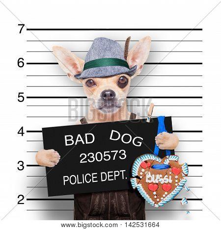 bavarian german chihuahua dog with gingerbread and hat mugshot at police station