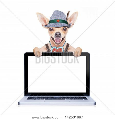 bavarian german chihuahua dog with gingerbread and hatlaptop pc screen computer display isolated on white background ready for the beer celebration festival in munich