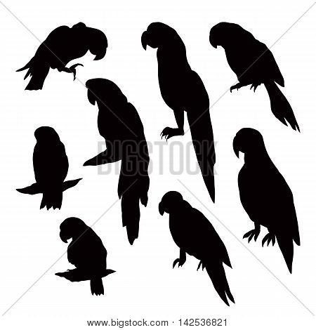 Silhouettes Of Parrots Isolated On White Background.