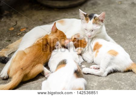 Mother cat feeding her litter of kitten