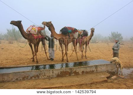 JAISALMER INDIA-FEBRUARY 19: Unidentified people stand near water reservoir during camel safari on February 19 2011 in Jaisalmer India. Camel safaris in That desert are very popular among tourists from Jaisalmer
