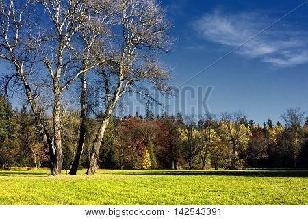 The hornbeam forest in late falls morning