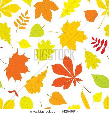 Autumn seamless pattern of different, isolated tree leaves - oak, chestnut, birch, Rowan, linden, jasmine, lilac, maple, willow, poplar, sycamore. Vector illustration in color on white background.