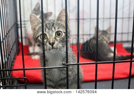 Little kittens in a cage of a shelter for homeless animals