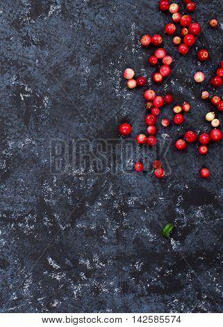 Foxberry Over Black
