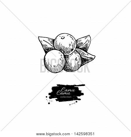 Camu camu vector superfood drawing. Isolated hand drawn illustration on white background. Organic healthy food. Great for banner poster label