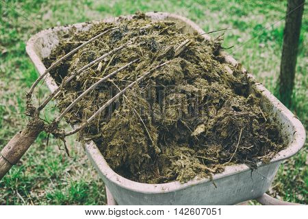 Wheelbarrow full of manure and pitchfork in garden, toned image
