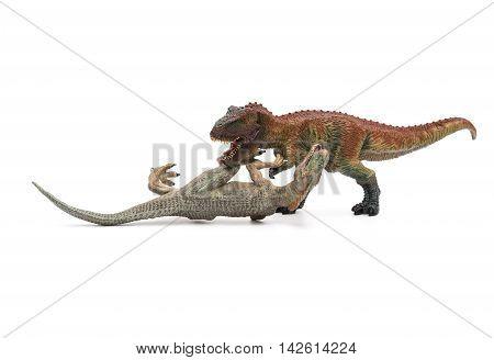 tyrannosaurus stands and allosaurus lays on white