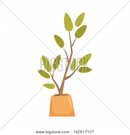 Rubber plant, pipal, bay tree in pot. Interior home and office potted plant. Houseplant cartoon vector illistration. Interior decoration. Flowerpot drowth and gardening.