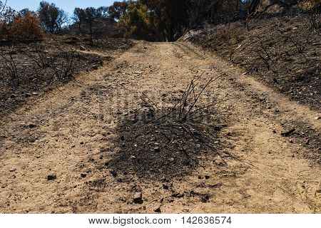 Patch Of Charred Ground