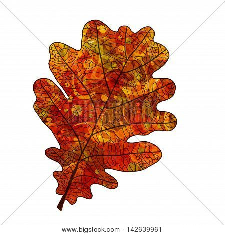 Bright red oak leaf with veins like watercolor on a white background. Vector illustration.
