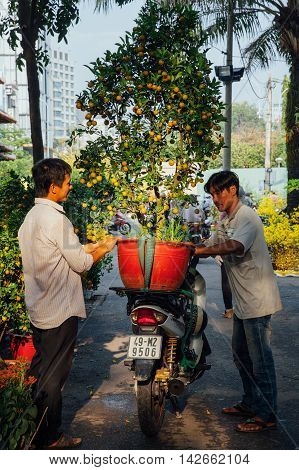 HO CHI MINH CITY VIETNAM - FEBRUARY 06: Men fasten holiday tree on the motorbike at the street market during Tet or Lunar New Year celebrations in Ho Chi Minh City Vietnam on February 06 2016.