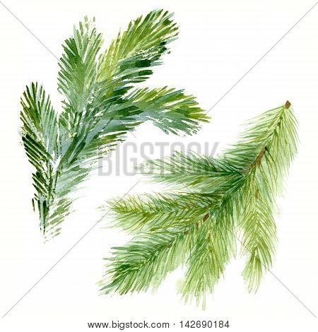 Watercolor Christmas tree branches. Hand painted texture with fir-needle natural elements isolated on white background.