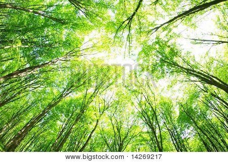 фон зеленый лес в Солнечный день