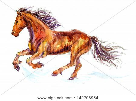 Hand painted Watercolor Illustration «Fast galloping horse»